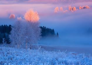 Photo: Winter Charm