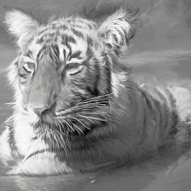 Tiger in the water by Pravine Chester - Digital Art Animals ( water, animals, monochrome, photograph, nature, tiger, black and white, digital manipulation, digital art, wildlife, digital painting )