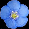 Colorado Rocky Mountain Wildflowers icon