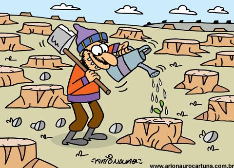 desmatamento 6.jpg
