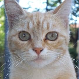 Котка by Georgi Kolev - Animals - Cats Portraits ( храсти., котка., ден., светлина., цветове. )