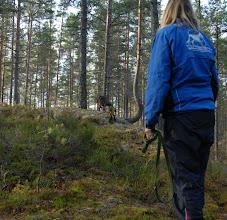 Photo: Ayla på vei ut i runderingsløypa, 8 mnd