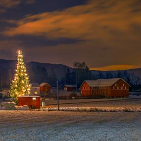 Christmas Eve 2014 by Johannes Mikkelsen - Public Holidays Christmas ( december, winter, d800, art, artistic, christmas, night, christmas tree, nikon, landscape,  )