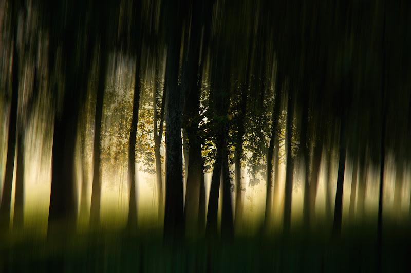 bosco alle prime luci di Silvano