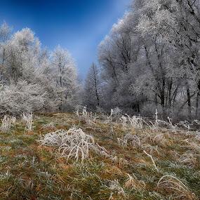 IVJE by Jani Novak - Landscapes Weather ( ivje )