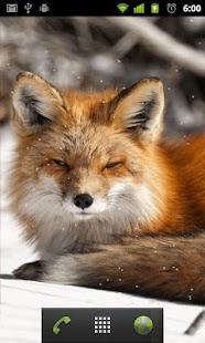 LWP polární liška - náhled