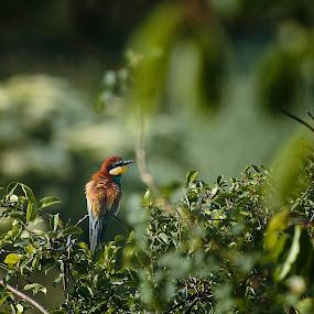 by Pavel Zach - Animals Birds