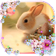 Easter Bunny Live wallpaper Download for PC Windows 10/8/7