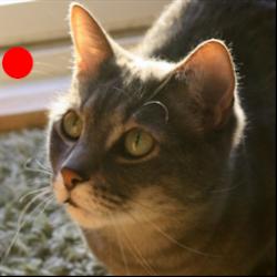 Cat Laser Toy