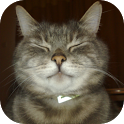 Kitty Stickers Widget icon