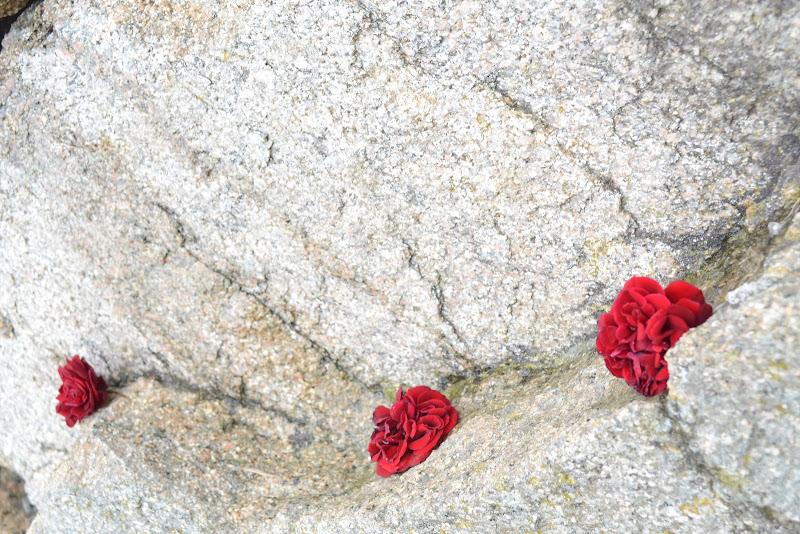 Rose... di granito di Andry_78