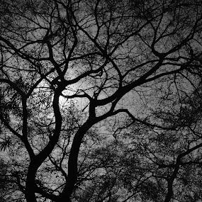 Connections by Praveen Kulshreshtha - Nature Up Close Trees & Bushes