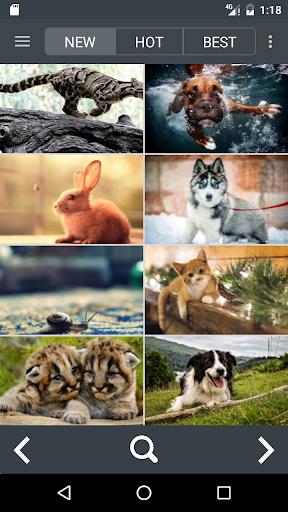 1,000,000 Wallpapers HD 4k(Best Theme App)  screenshots 8
