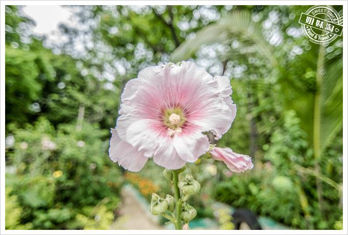 大東溼地公園陶園很多花