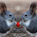 Sweet Squirrel Wallpapers icon