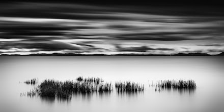 """Photo: """"Enveloped"""".   The returning high tide surrounds the reeds near Iona Beach in Vancouver, British Columbia"""
