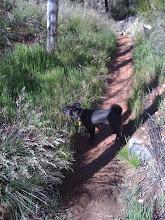 Photo: Malia hiking in Sedona, AZ