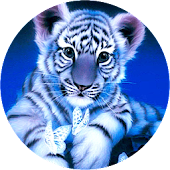 Little Blue Tiger Wallpaper