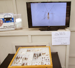 Photo: Our setup for the public outside the lab's door. A display drawer and slideshow of insects photographed during the event.