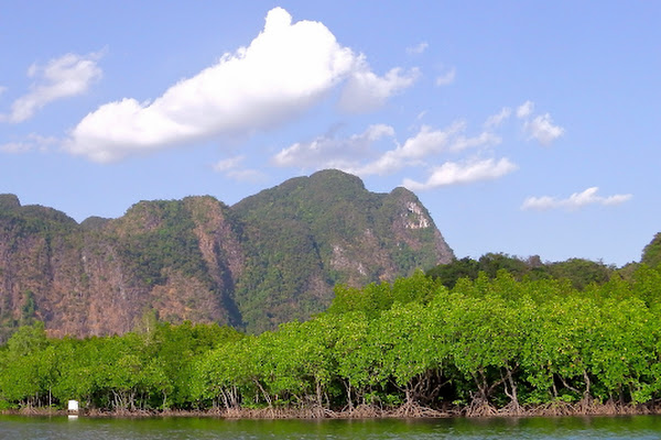 Explore the spectacular mangrove forest eco-system