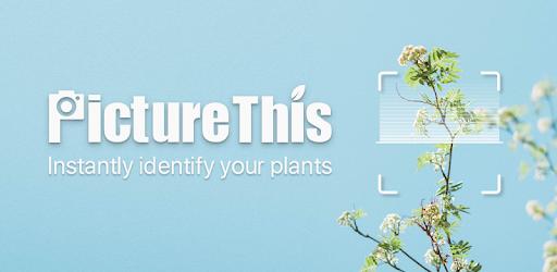 PictureThis: Identify Plant, Flower, Weed and More - aplikacja do rozpoznawania kwiatów