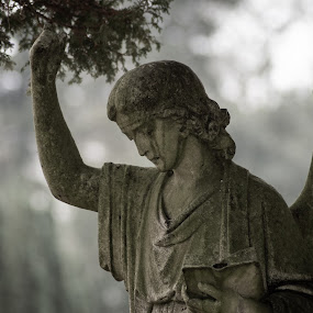 Weeping Angel by Bradley Foot - Buildings & Architecture Statues & Monuments ( macro, atmospheric, statue, angel, cemetery, canon )