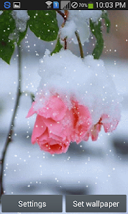 Snow Rose - Live Wallpaper screenshot 4
