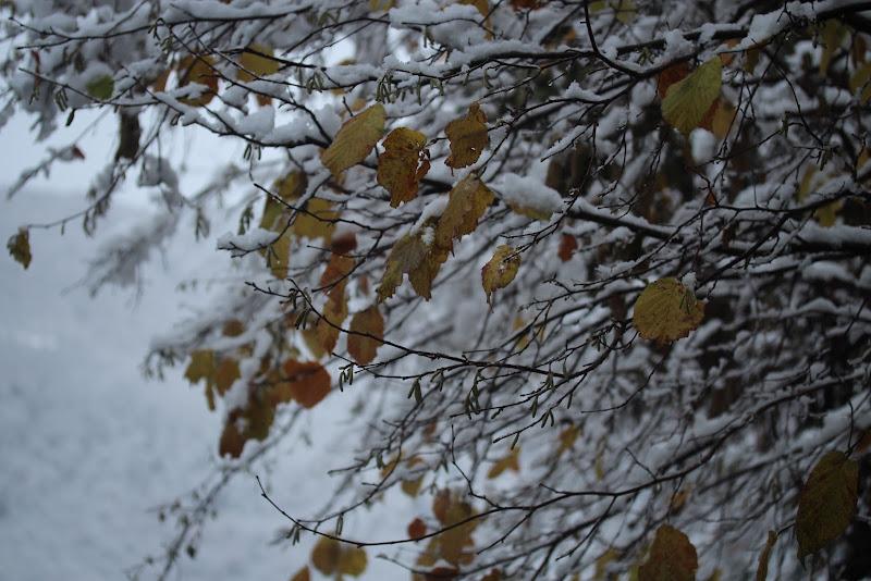 la prima neve di vercors