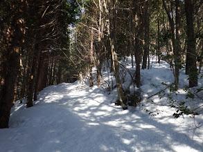 林道をひたすら進む