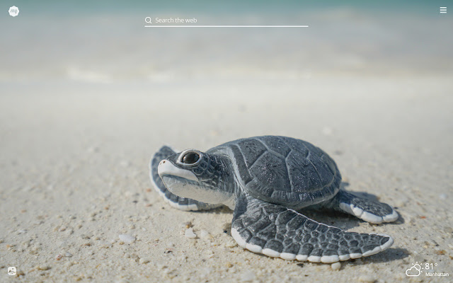 My Baby Turtle HD Wallpapers New Tab Theme