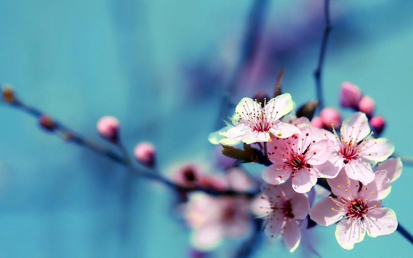 Flower Wallpapers Hd Android Apps On Google Play