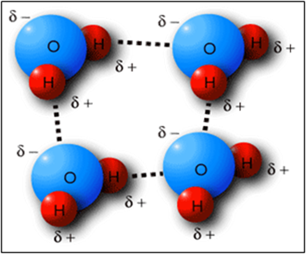 Molecular Bonding in Water
