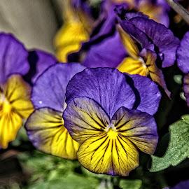 CP flower 10 by Michael Moore - Flowers Flower Gardens