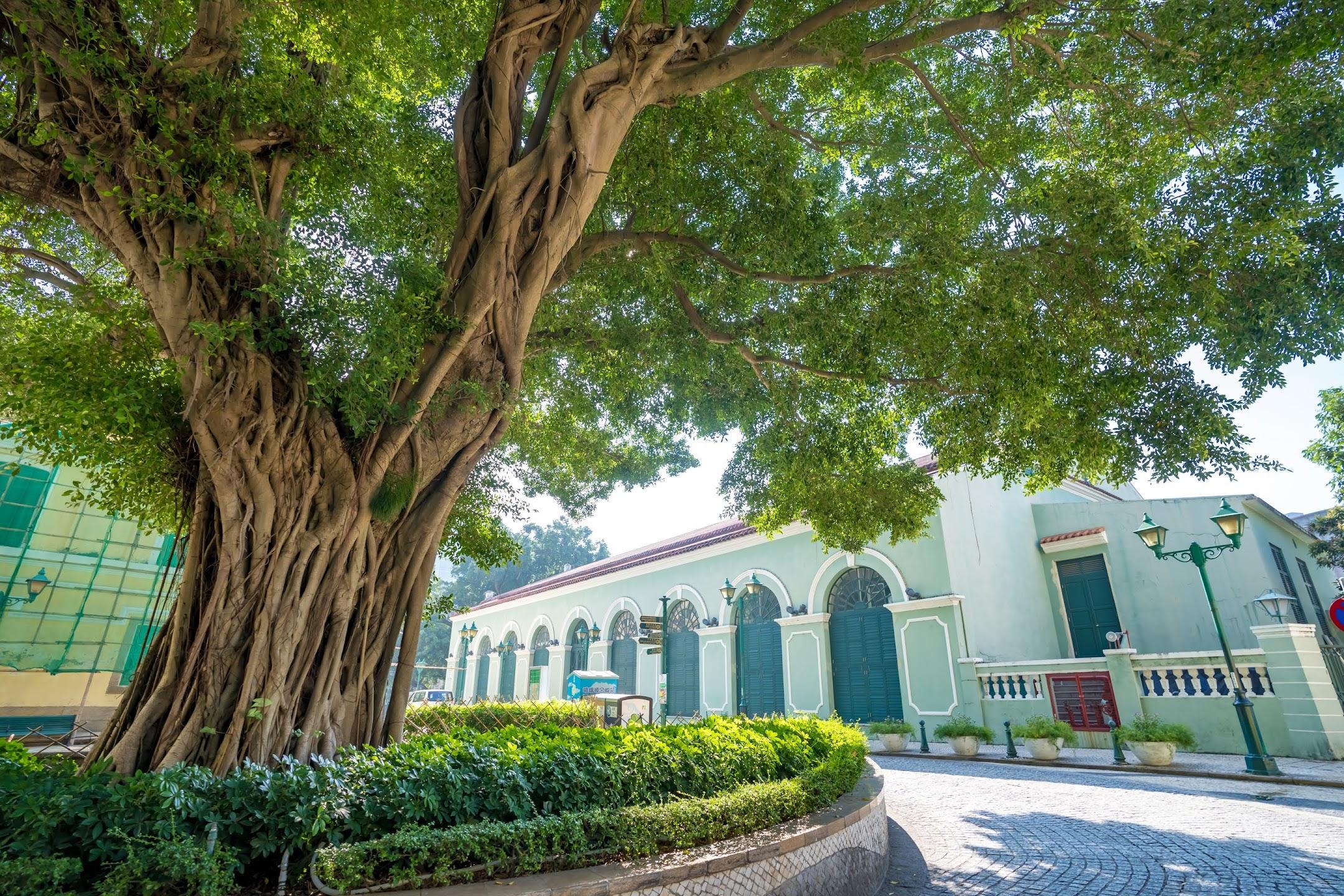 Macau St. Augustine Square/崗頂前地/Largo de Santo Agostinho