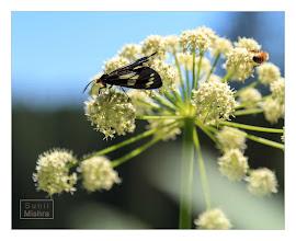Photo: Eastern Sierras-20120717-794