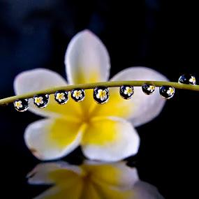 by ERFAN AFIAT SENTOSA - Nature Up Close Natural Waterdrops (  )