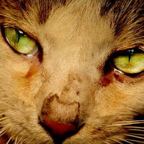 Eyes by Mahesh Thiru - Animals Other Mammals ( scary, cat, eyes )