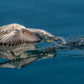 by Eseker RI - Animals Birds