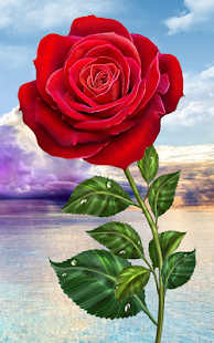 Rose. Magic Touch Flowers- screenshot thumbnail