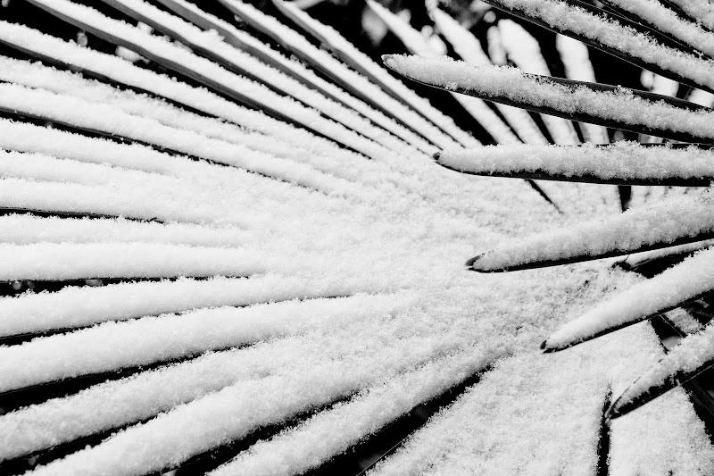 Dita di neve di atlantex