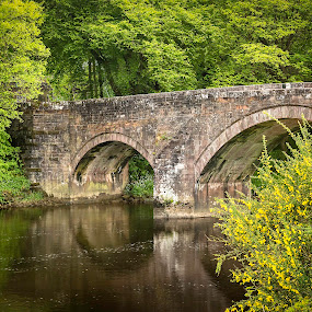 Hoddom Bridge by James Johnstone - Buildings & Architecture Bridges & Suspended Structures ( gorse, hoddom, bridge, yellow, flowers )