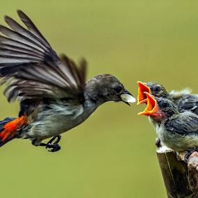 Breakfast time by Husada Loy - Animals Birds (  )