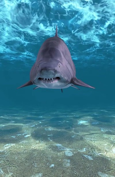 Shark Attack Live Wallpaper APK Download
