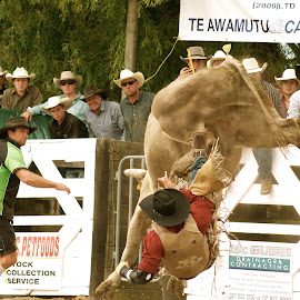 The Underside by Bryan Lowcay - Sports & Fitness Rodeo/Bull Riding ( raw, rodeo,  )