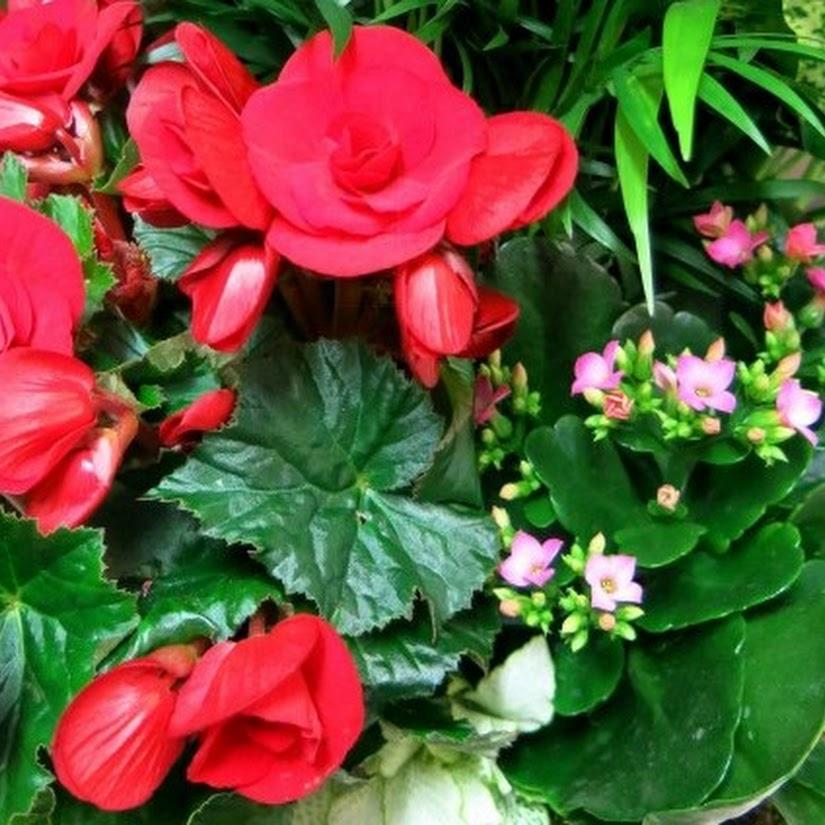 plantas para el día del padre