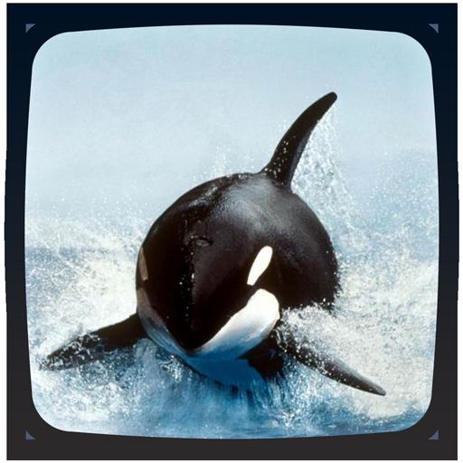 Orca Live Wallpaper