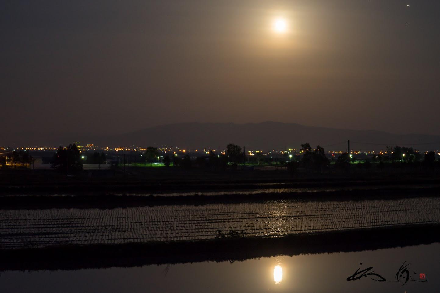 繭玉のように輝く、水田に映り込む満月のゆらぎ