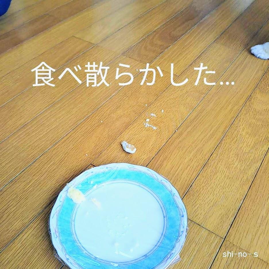 犬用ケーキが食べ散らかされた