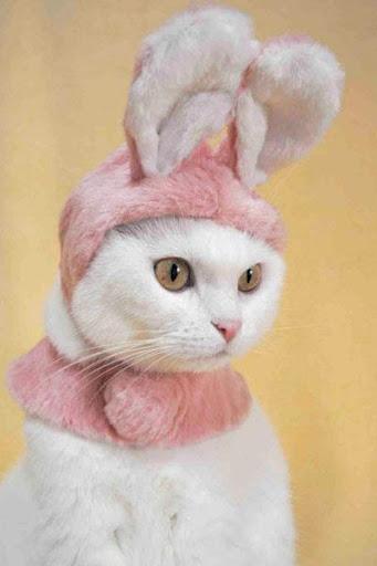 猫の服スタイル