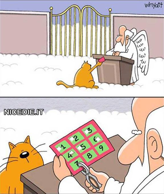 un gatto muore, arriva in paradiso si presenta a San Pietro, gli porge un abbonamento con nove caselle, timbra la 7 e lo rimanda giù.